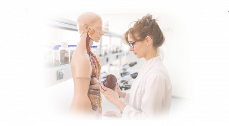 Download free pdf Human Anatomy charts to augment our live, hands-on ultrasound training classes.