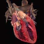 Logo-3D_Heart1