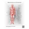 Human Arterial Anatomy