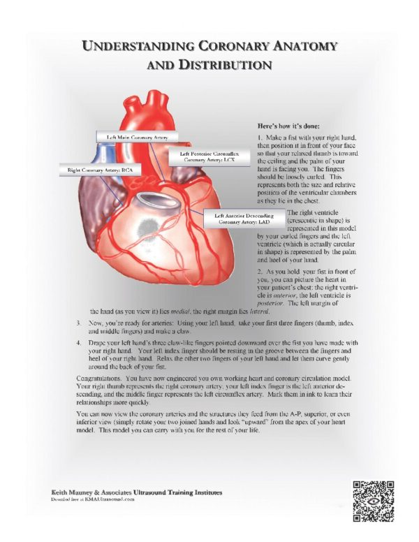 How to Easily Understand Coronary Artery Distribution in 3-D