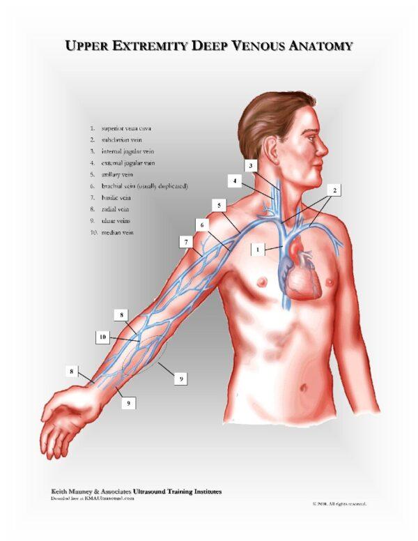Upper Extremity Venous Anatomy